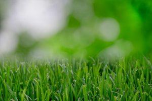 nature-garden-grass-lawn-large