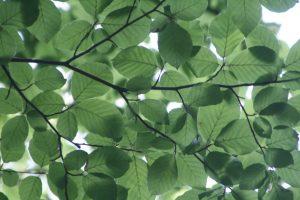 pexels-photo-72509-large