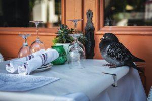 duif op tafel